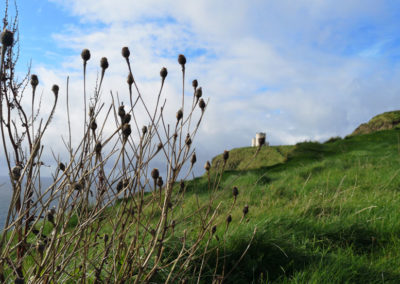Cliffs of Moher castle Sea